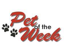 Hot 101.9/CASPCA Pet of the Week